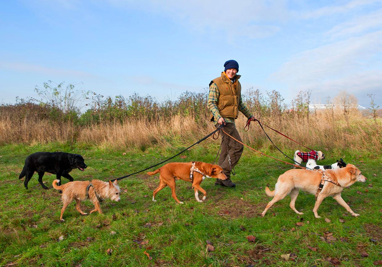 Karen-Fleming-mit-6-Hunden