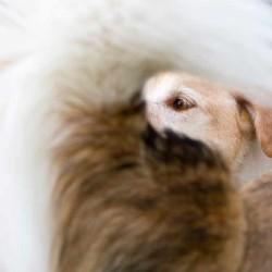 Hundegalerie von Karen Fleming